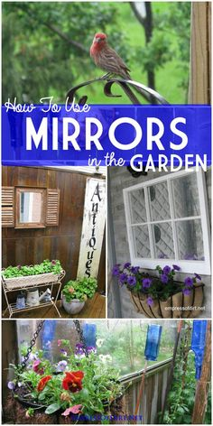 How to use mirrors in the garden for safe, creative, wonderful effects in your backyard.