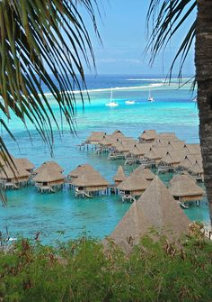 If I ever won the lottery, the first thing I would do is live in a over-the-water, beach bungalow in Tahiti for a week.   > Sofitel Resort, Moorea, Tahiti
