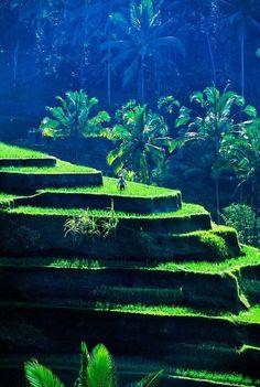 Summer trip Rice Terraces near Sebatu, Bali So Beautiful! #ubud #balibible #riceterraces