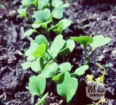 Herbs, Fruit, Plants, Food, Essen, Herb, Meals, Plant, Yemek