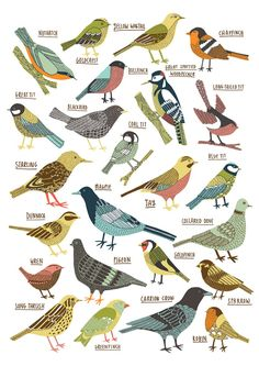 'British Garden Birds' by Kate Sutton a freelance illustrator based in the north of England. Collage Kunst, British Garden, British Wildlife, Bird Drawings, Drawing Birds, Bird Illustration, Grafik Design, Art Plastique, Bird Art