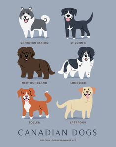 Dog Breeds print: CANADIAN DOGS art print (dog breeds from Canada) - Dog breeds by Country - Katzen, Hunde, Tiere Cute Poster, Dog Poster, Golden Retriever, Labrador Retriever, Labrador Dogs, I Love Dogs, Cute Dogs, Canadian Eskimo, Canadian Dog