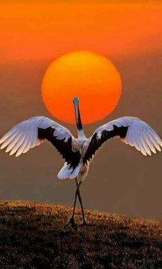 Ideas Quotes Nature Wildlife For 2019 Pretty Birds, Beautiful Birds, Animals Beautiful, Cute Animals, Beautiful Pictures, Beautiful Sunrise, Exotic Birds, Colorful Birds, Colorful Animals