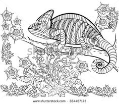 Coloring Book For Adult Chameleon