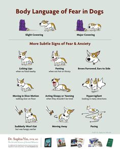 Body Language for Dogs showing their fear.