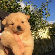 Things that make you go AWW! Like puppies, bunnies, babies, and so on. A place for really cute pictures and videos! Cute Puppies, Cute Dogs, Dogs And Puppies, Doggies, Baby Dogs, Cute Creatures, Beautiful Creatures, Fluffy Animals, Animals And Pets