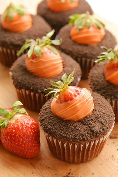 carrot patch cupcakes.