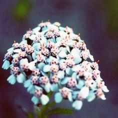 Obligatory pretty flower shot.