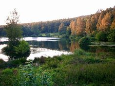 Hirschborn pond near Bad Soden-Salmuenster,  Spessart forest, Germany