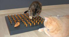 Ein Fummelbrett für Katzen können Sie einfach selber bauen ➲ die  passende Katzenfummelbrett-Bauanleitung mit Bildern ➲ finden Sie hier…
