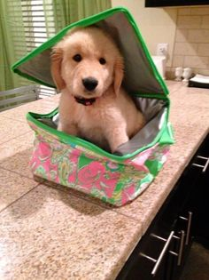 aww pup in a lunch box