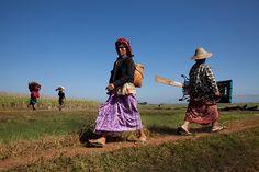 0028 Coming and Going--Inle Lake , Myanmar