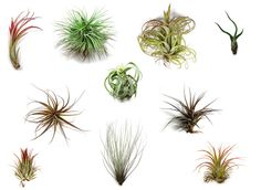 Helpful air plant care guide.