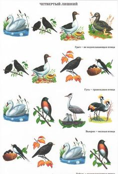 Pond Life, Kids Zone, Help Kids, Life Inspiration, Languages, Homeschooling, Sew, Ocean, Birds