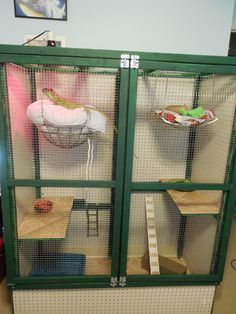 I made this cage for my iguana DiNozzo. If she looks a little lost, it is because she now has about five times more room! Reptile Room, Reptile Cage, Reptile Enclosure, Iguana Care, Iguana Pet, Bearded Dragon Habitat, Bearded Dragon Cage, Lizard Cage, Reptile Terrarium