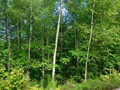 Standardizing Nature: Trees, Wood, Lumber (Part Wood Lumber, Nature Tree, Garden Tools, Breathe, Outdoor Structures, Deep, Gatineau, Plants, Pictures