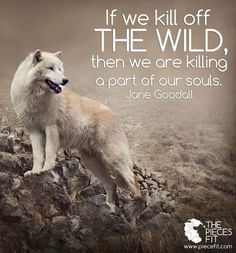 If we kill off THE WILD, then we are killing a part of our souls ~ Jane Goodall. Jane Goodall, Badass Quotes, Best Quotes, Life Quotes, Dark Quotes, Wolf Qoutes, Nature Sauvage, Native American Quotes, Wolf Love