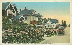"""City of Roses"", Portland, Oregon, ca.1916. Penny Postcard, Postmarked 1916, ""Beautiful Homes and Side Walks Lined with Roses, Portland, Oregon."". Published by Lipschuetz Company, Portland, Oregon. Card #289. April 4, 1916"