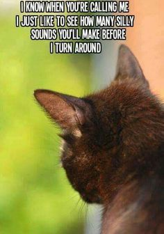 91 Best Frank big mood images in 2019 | Cats, Funny Animals