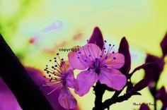 Plommeblomst - canvas lerretsbilde A4 str. A4, Canvas, Plants, Pictures, Tela, Canvases, Plant, Planets