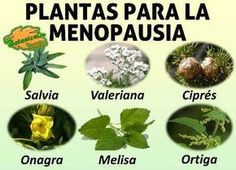 plantas medicinales utilizadas en el tratamiento natural de la menopausia