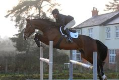 SERIOUSLY SCOPEY - GRANDSIRE TOUCHDOWN for sale | Horse Deals