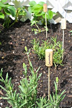 Using old wine bottle corks to make #DIY garden markers! What are you planting this year?