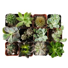 This collection of 12 assorted succulents and cacti adds a gorgeous pop of desert color to your decor. Decorate your home with air plants, succulents and terrariums. Green decor ideas, Green Monday, creative gift ideas, Christmas gifts, Christmas presents, Secret Santa gift ideas, unique gift ideas, best gift ideas. #GiftCreativity