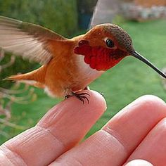 Hummingbird. They're so little but so full of energy.