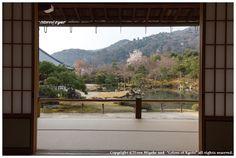 Tenryu-ji temple(天龍寺), Arashiyama district, Kyoto Japan.