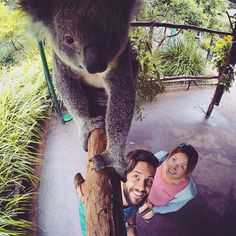Did you know that you can pat a #koala and get your photo taken together in our Koala Walk-Through? This is just another interactive inclusion when you visit us at Australia Zoo! Make sure you stop by like @theadventuresofbeth did!