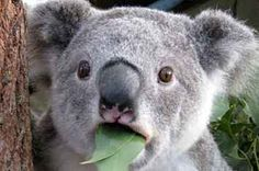 33 Types Of Stoners Illustrated With Koalas