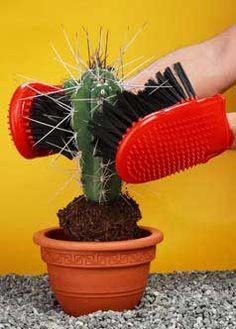 cactus gloves