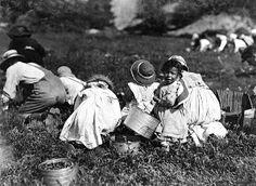 History in Photos: Lewis Hine - Farm Work