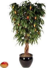 des astuces de jardinage pour faire pousser une mangue                                                                                                                                                                                 Plus