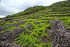 Azores - Pico - Vinhas em curraleta 1/2 (Acyro) Tags: portugal pico aores vinhas acyro curraleta