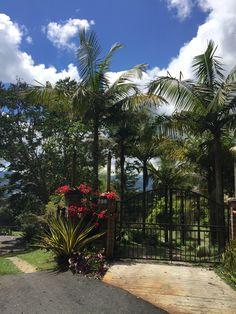 Sidewalk, Plants, Eye Brows, Sidewalks, Plant, Pavement, Walkways, Planting, Planets