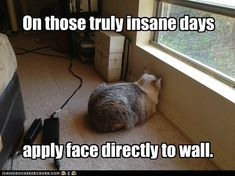 Apply Face To Wall  (I had a cat who would do this a lot...she was a Siamese)