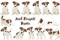 Jack Russell Terrier by Orangepencil on @creativemarket