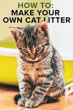 How to Make Homemade Cat Litter