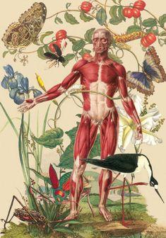Juan Gatti, Ciencias Naturales, S/ T, Collage sobre lienzo, 122 x 75,5cm, 2011 ©