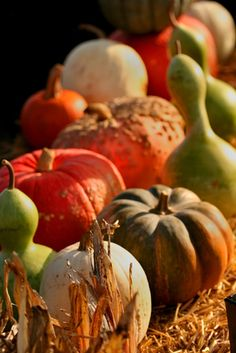 Fall gardening on pinterest fall vegetable gardening glass garden art and vegetables - Gardening in october a brief to do list ...