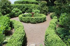 A pathway with low hedging and a birdbath, seen on the 2014 Bundanoon Garden Ramble.