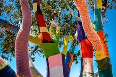 Aquaholic had planned all week to pay a visit to the yarn bombed tree, high above  the city on the Cold Springs Trail. [pics]