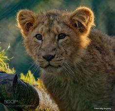 Trouble by MariaSelley #animals #animal #pet #pets #animales #animallovers #photooftheday #amazing #picoftheday