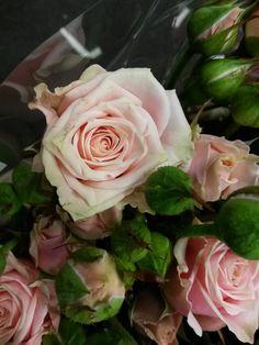 #Rose #Rosa #Sweet4Tune; Availalble at www.barendsen.nl