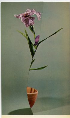 Ikebana, the delicate and ancient Japanese art of folding and placing cut stems, leaves and flowers in vases, finds new form in the collage work of Dutch artist Nicola Kloosterman. Natural Stills, Ancient Japanese Art, Dutch Artists, Chinese Art, Chinese Painting, Linocut Prints, Still Life Photography, Japanese Culture, Ikebana