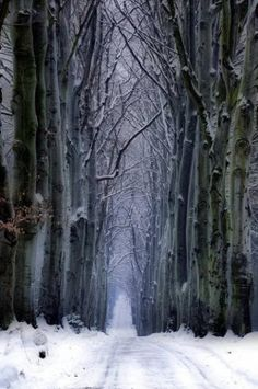 Winter Forest, Czech Republic #Czech #travel #Europe  Repinned by http://www.iconiceurope.com/
