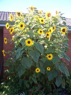 Nourish Me Sunflower Bread
