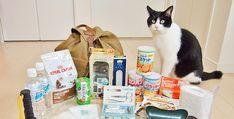 東日本大震災のあと、「ウチも非常袋を作っておかなくちゃ」と思い、とりあえず用意していたものの、ぶっちゃけ、ホームセンターでそれらしきものを買い揃えただけで、本当に必要なものの取捨選択はできていない状態。さらに、猫のためのグッズはまったく考えられておらず・・・・・・(ゴメン、猫たち) これではイカンと重い腰を上